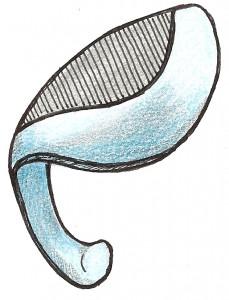 Resseccão crural lateral